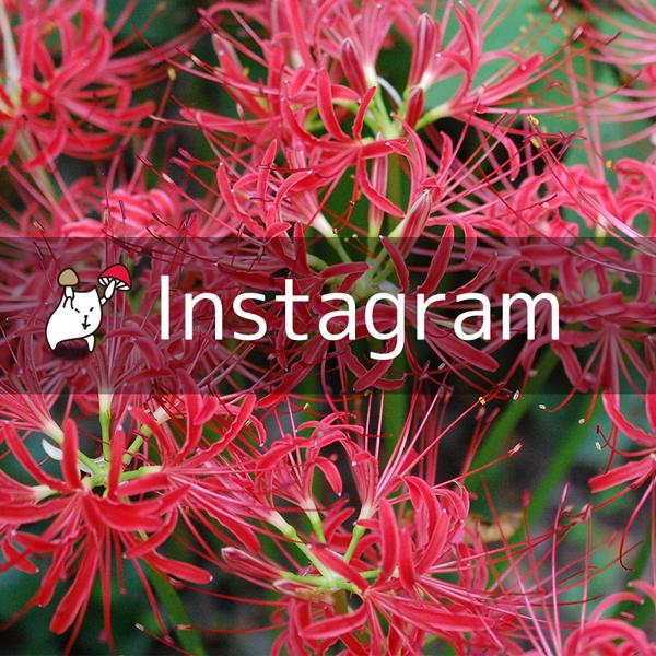instagram アクセストークン